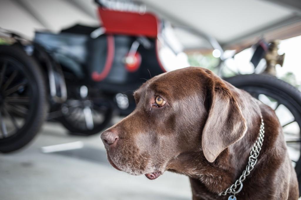 Hund in Werkstatt bei KFZ Maier